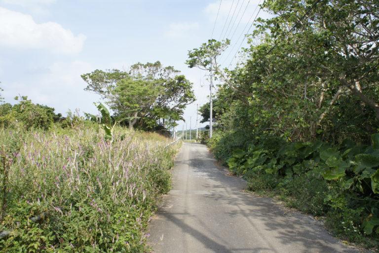 栄集落の道