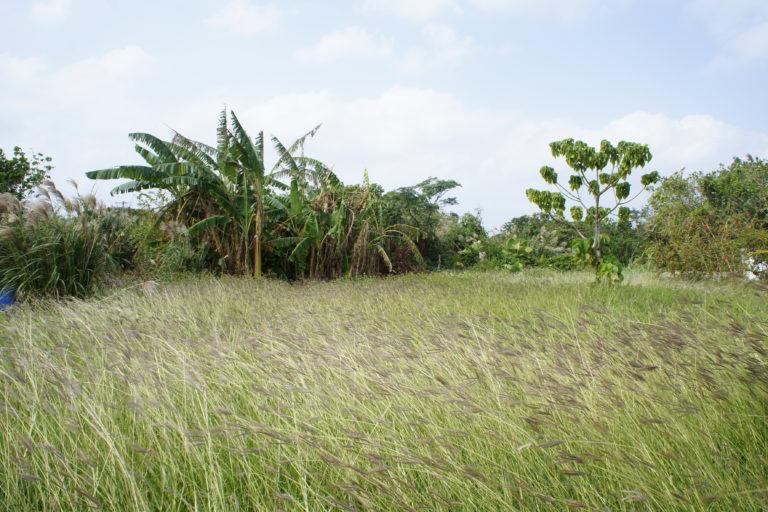 栄集落の風景